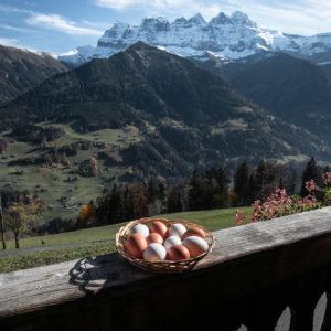 Oeufs de la ferme des Lisats à Val d'Illiez produits frais de la vallée